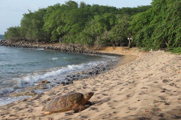 Comment préparer ses vacances en Guadeloupe en famille ?