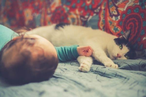 Chat et bébé : quelques règles pour leur sécurité